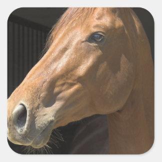 Pegatinas del perfil del caballo de la castaña