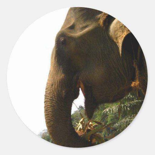 Pegatinas del perfil del elefante pegatina redonda