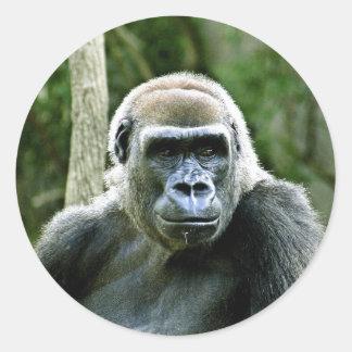 Pegatinas del perfil del gorila pegatina redonda