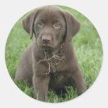 Pegatinas del perrito de Brown Labrador Pegatina Redonda