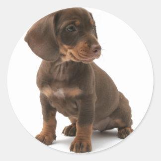 Pegatinas del perrito del Dachshund Etiquetas Redondas