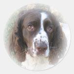 Pegatinas del perro de aguas de saltador inglés etiqueta redonda