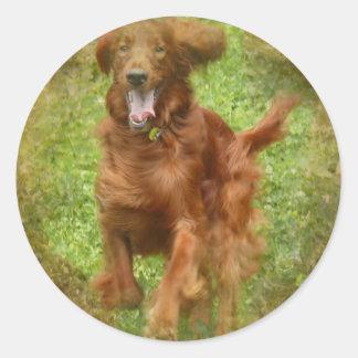 Pegatinas del perro de Irish Setter Pegatina Redonda