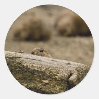 Pegatinas del perro de las praderas 1531 pegatina redonda