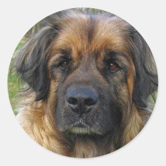 Pegatinas del perro de Leonberger, foto hermosa, Pegatina Redonda