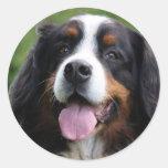 Pegatinas del perro de montaña de Bernese, idea Pegatina Redonda
