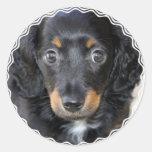 Pegatinas del perro de perrito de Daschund Etiqueta Redonda
