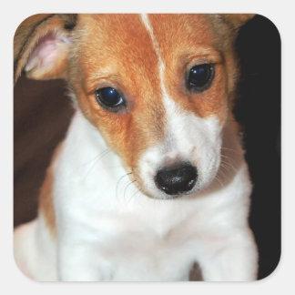 Pegatinas del perro de perrito de Jack Russell Pegatinas Cuadradas