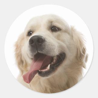 Pegatinas del perro de perrito del golden