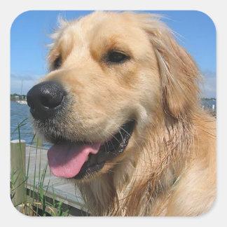 Pegatinas del perro de perrito del golden colcomanias cuadradas personalizadas