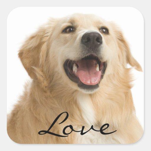 Pegatinas del perro de perrito del golden calcomanía cuadradas