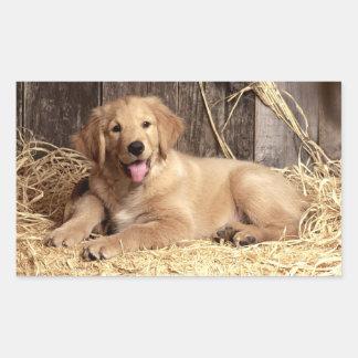 Pegatinas del perro de perrito del golden pegatina rectangular