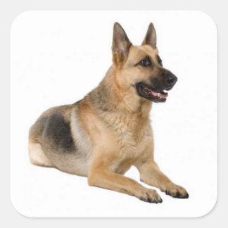 Pegatinas del perro de perrito del pastor alemán calcomanías cuadradas personalizadas