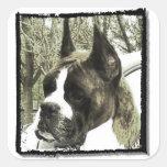 Pegatinas del perro del boxeador pegatina cuadrada
