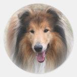Pegatinas del perro del collie pegatina redonda