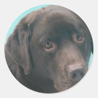 Pegatinas del perro del laboratorio del chocolate pegatina redonda