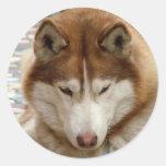 Pegatinas del perro esquimal de Brown Pegatinas Redondas