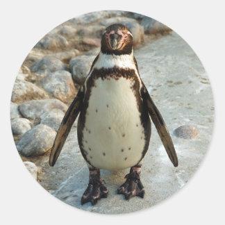 Pegatinas del pingüino etiqueta redonda