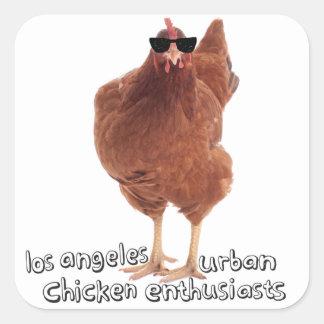 ¡Pegatinas del pollo! Pegatina Cuadrada
