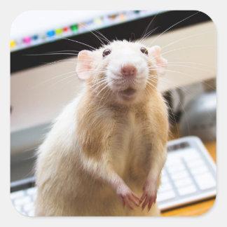 Pegatinas del ratón de Marty - Standin alto Calcomanías Cuadradas