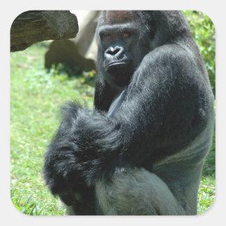 Pegatinas del resplandor del gorila pegatinas cuadradases