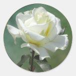 Pegatinas del sello del sobre del boda del rosa bl