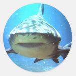 Pegatinas del tiburón etiquetas redondas