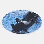 Pegatinas del trío de la orca colcomanias de óval
