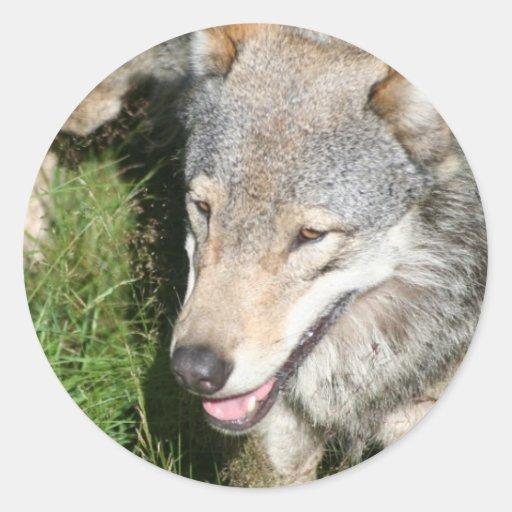 Pegatinas del vagabundeo del lobo etiquetas redondas