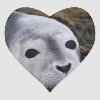 Pegatinas dulces de la cría de foca pegatina en forma de corazón