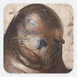 Pegatinas dulces del león marino calcomanías cuadradass personalizadas