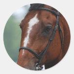 Pegatinas ecuestres de la demostración del caballo