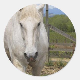Pegatinas equinos blancos etiquetas redondas