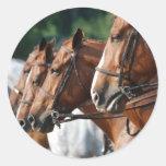 Pegatinas equinos de la demostración del caballo