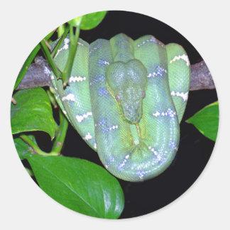 Pegatinas esmeralda de BoA-Morticia del árbol Pegatinas Redondas
