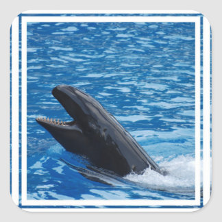 Pegatinas falsos de la orca pegatina cuadrada