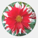Pegatinas florales rojos y blancos de Dalhia Etiqueta Redonda