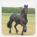 Pegatinas frisios del caballo pegatina cuadradas personalizadas