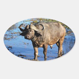Pegatinas grandes del safari del búfalo del cabo 5 pegatina ovalada
