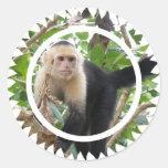 Pegatinas hechos frente blancos del mono de Capucc