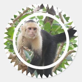 Pegatinas hechos frente blancos del mono de pegatina redonda