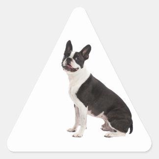 Pegatinas hermosos de la foto del perro de Boston Pegatina Triangular