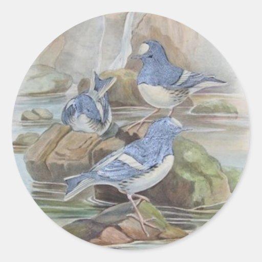 Pegatinas hermosos de los pájaros de agua etiqueta redonda