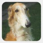 Pegatinas hermosos del perro de la foto del perro calcomanias cuadradas