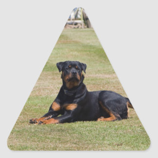 Pegatinas hermosos del perro de Rottweiler, idea Pegatina Triangular