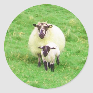 Pegatinas irlandeses de las ovejas pegatina redonda