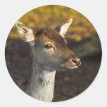 Pegatinas jovenes de los ciervos etiqueta redonda