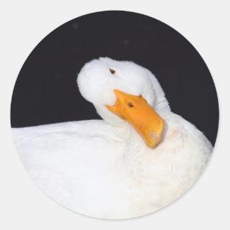 Pegatinas lindos, blancos del pato pegatina redonda