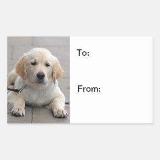 Pegatinas lindos de la foto del perro de perrito pegatina rectangular