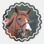 Pegatinas lindos del caballo de la castaña etiquetas redondas
